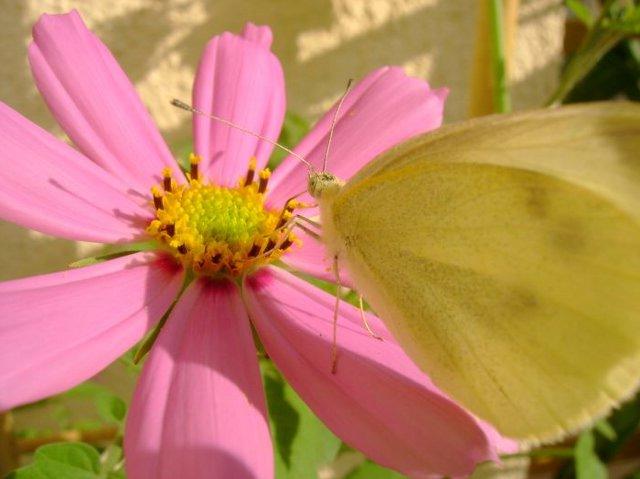 http://fotoforum.gazeta.pl/photo/0/fh/ed/vhwc/vNAUPBzYa0Z2Wsb18B.jpg