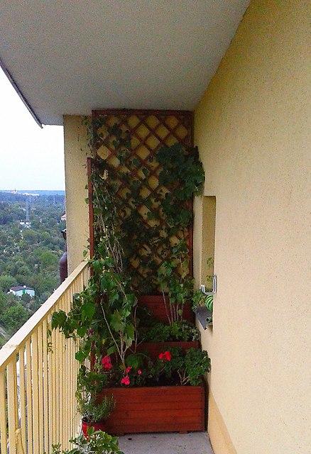 Częściowo Zacieniony Balkon Zachodni Rośliny Ogród I