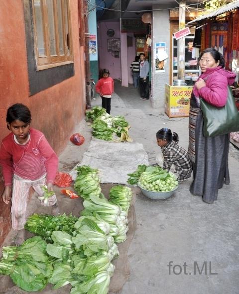 tybetanczycy 10