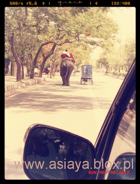 slon 1