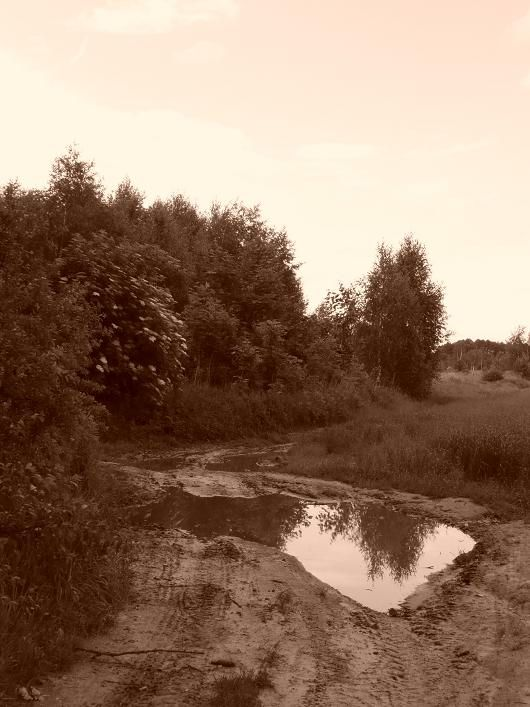 powsin-łąki4