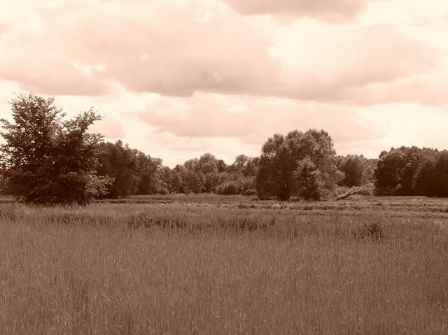 powsin-łąki2
