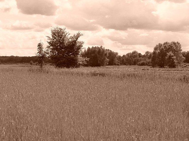 powsin-łąki6