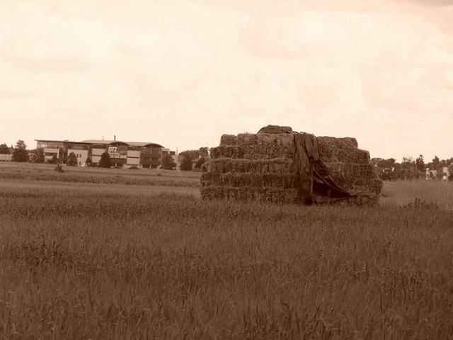 powsin-łąki1