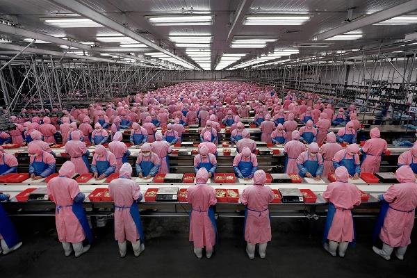 Manufacturing #17, Deda Chicken Processing Plant, Dehui City, Jilin Province, 2005, Edward Burtynsky