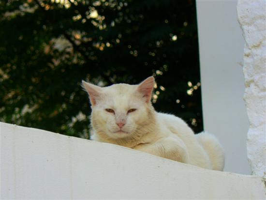 W Hołdzie Kotom Z Symi