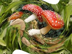 http://fotoforum.gazeta.pl/photo/0/wa/qa/uuil/cBbMiJp54fjmEj6F8X.jpg