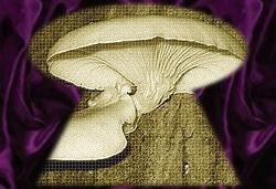 http://fotoforum.gazeta.pl/photo/0/wa/qa/uuil/mWCVG3ztkRlTXAGogX.jpg