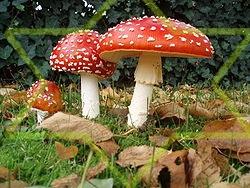 http://fotoforum.gazeta.pl/photo/0/wa/qa/uuil/r3BPdNXaeBLfTm0W8X.jpg