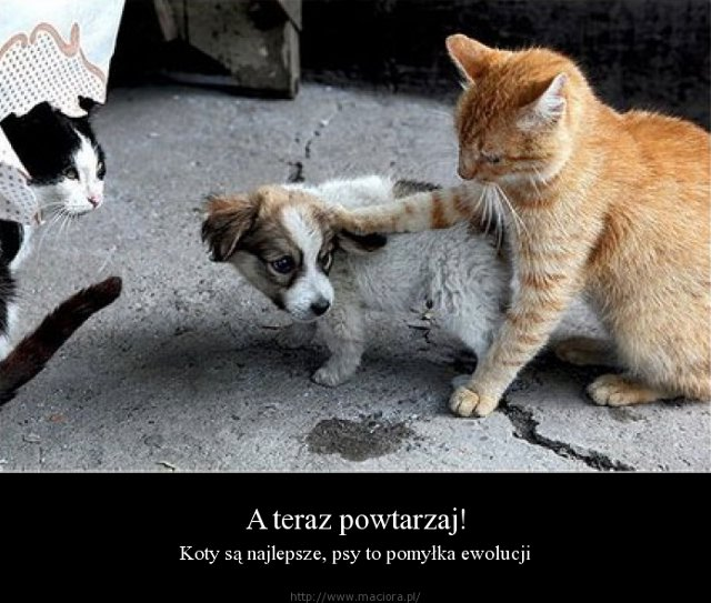 http://fotoforum.gazeta.pl/photo/0/ya/ka/n9kt/okxxfdiYOicfI3NOpB.jpg