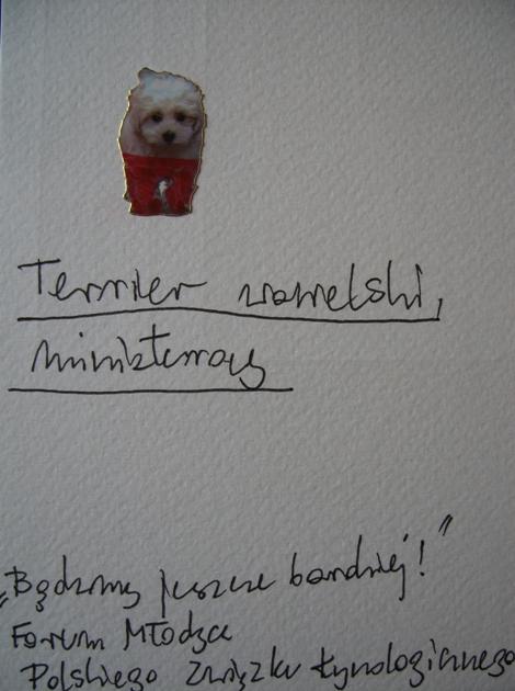 Terrier wawelski, miniaturowy