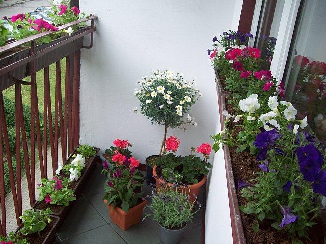 http://fotoforum.gazeta.pl/photo/1/la/eb/bevy/6UVLK46ubcFy6umRmB.jpg