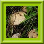 http://fotoforum.gazeta.pl/photo/1/wb/qa/5ixj/JGpQ6bZ0iFydU3Nc7X.jpg