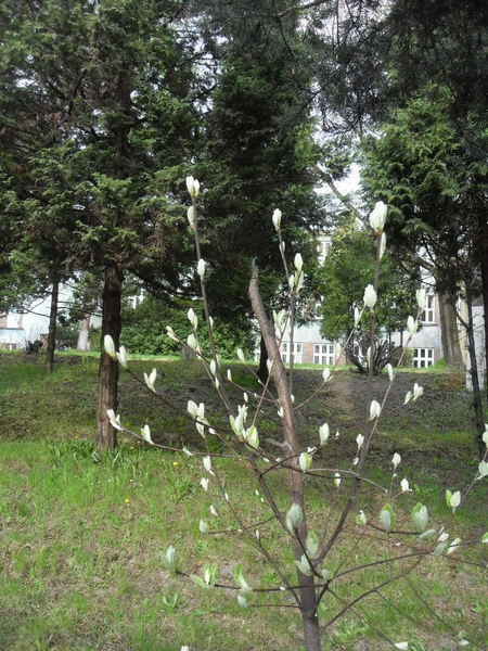 http://fotoforum.gazeta.pl/photo/1/wb/qa/5ixj/YbYhxsvaloDSI1zi1X.jpg