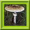 http://fotoforum.gazeta.pl/photo/1/wb/qa/5ixj/eZHd7PAHLQ3Vi8uOZA.jpg