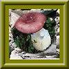 http://fotoforum.gazeta.pl/photo/1/wb/qa/5ixj/skr4nDLdChkorAbbmA.jpg