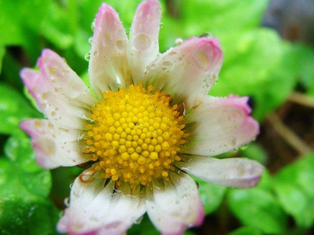 kwiat zmysłowo