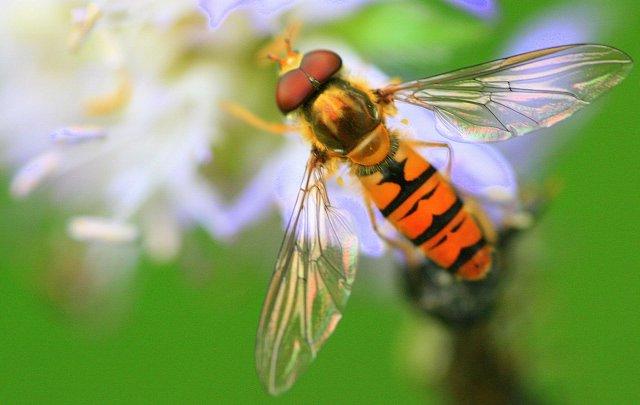 owad na kwiatku 2