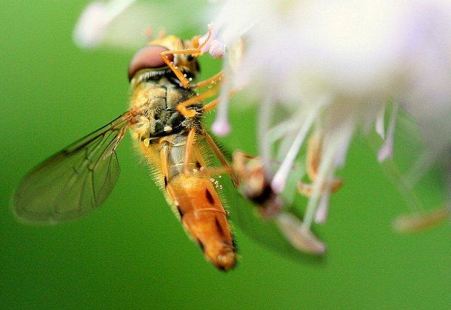 owad na kwiatku