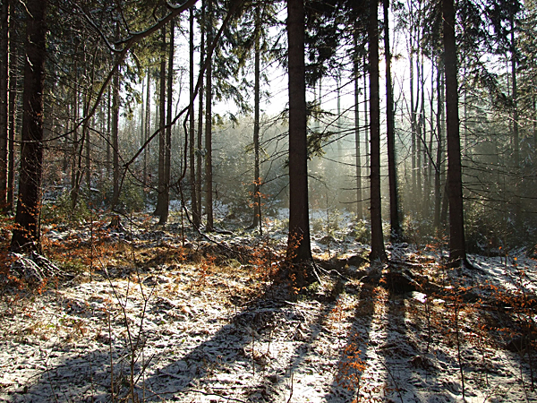 w rudawskim lesie