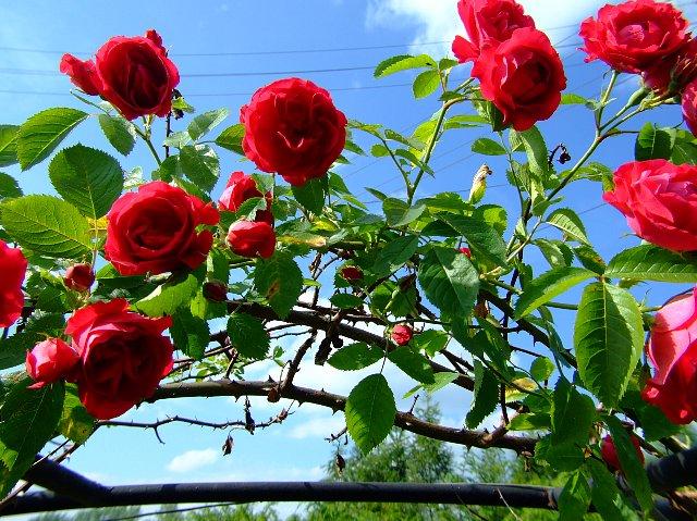 http://fotoforum.gazeta.pl/photo/3/bb/uc/jsf4/vo7SwV9ayI9QNRFizB.jpg