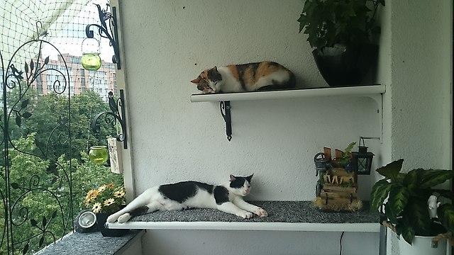 http://fotoforum.gazeta.pl/photo/3/ei/ef/kdsh/S61gAPBTzjQHZKaSeB.jpg