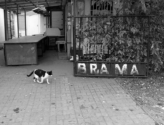 kot z warszawskich Bielan