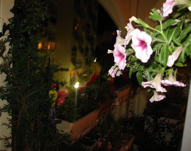 http://fotoforum.gazeta.pl/photo/3/mf/ji/cvpa/kSLCAJhZjF1nboAz4B.jpg