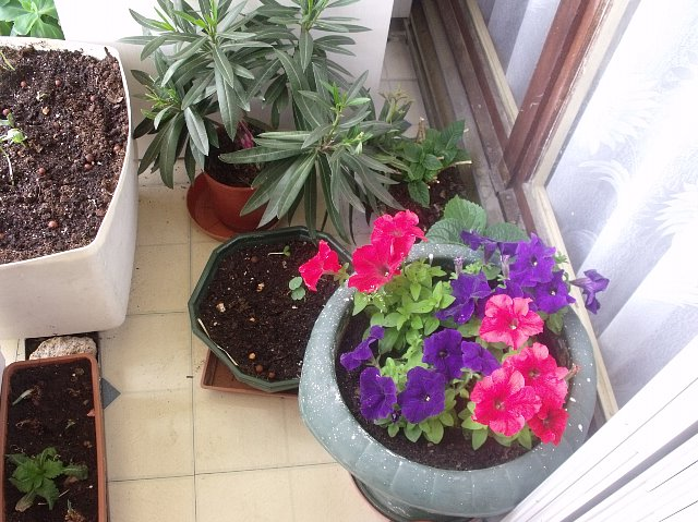 http://fotoforum.gazeta.pl/photo/3/mf/ji/cvpa/rogjOuawOePluBOkCB.jpg