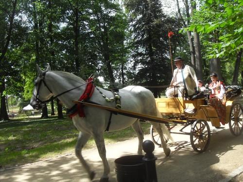 http://fotoforum.gazeta.pl/photo/3/wd/qa/jcow/DyajIRZTN8ZJ1F2OpX.jpg