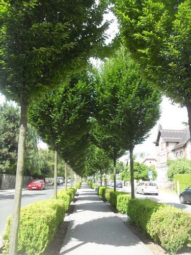 http://fotoforum.gazeta.pl/photo/3/wd/qa/jcow/ney6z1cR0fy3O0SYjX.jpg