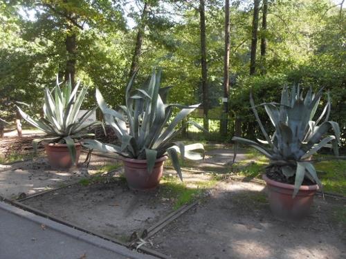 http://fotoforum.gazeta.pl/photo/3/wd/qa/jcow/ybBmqIBrA93JaD46PX.jpg
