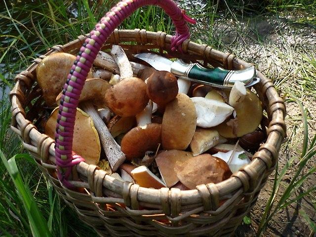 Один курянин умер, отравившись грибами
