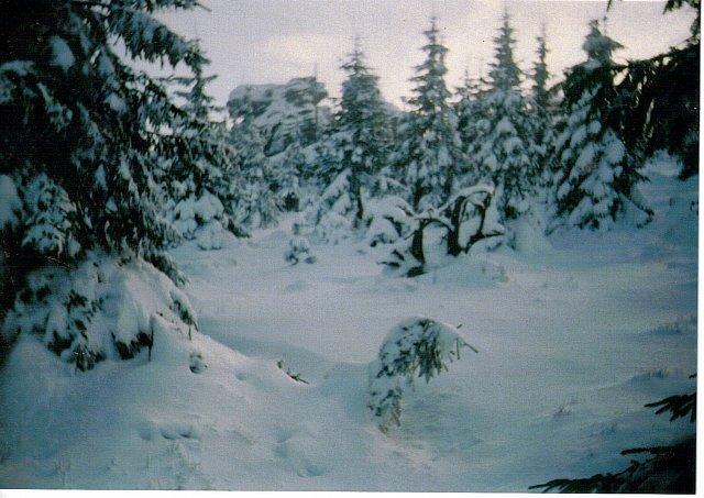 Lwy w zimie na Hucisku