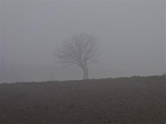 http://fotoforum.gazeta.pl/photo/4/ce/la/3aiu/kkB47kkuaKnyDfdOsB.jpg