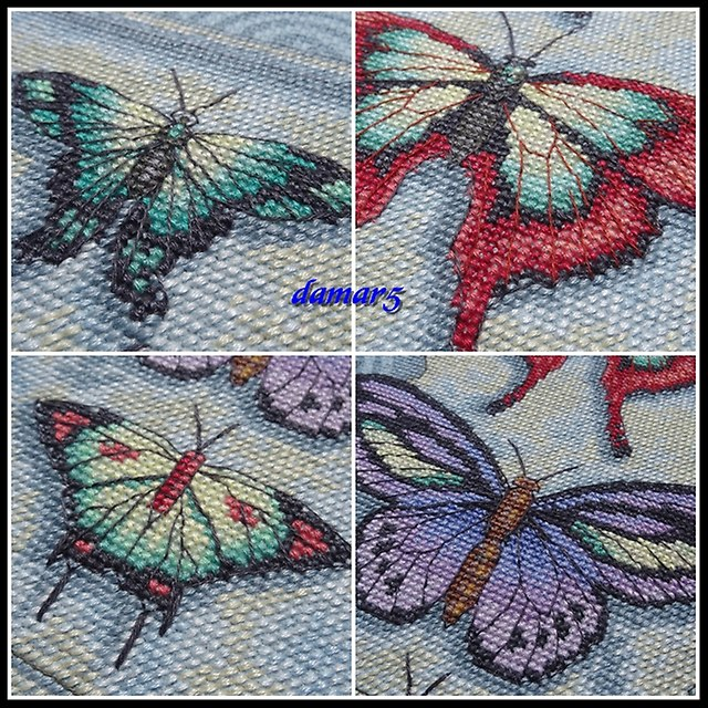 Butterfly Scroll marzec2015g