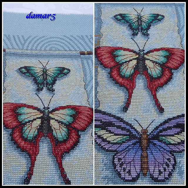 Butterfly Scroll marzec2015e