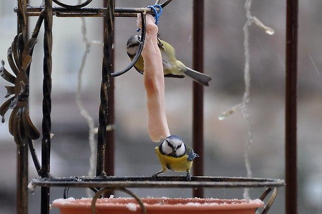 http://fotoforum.gazeta.pl/photo/5/fa/ff/reof/YG8nvkY06j1gkHhZFB.jpg