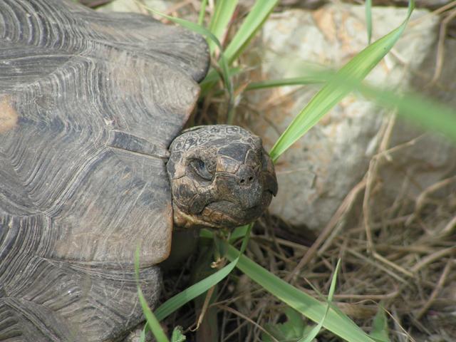 Żółw na Kerameikosie w Atenach