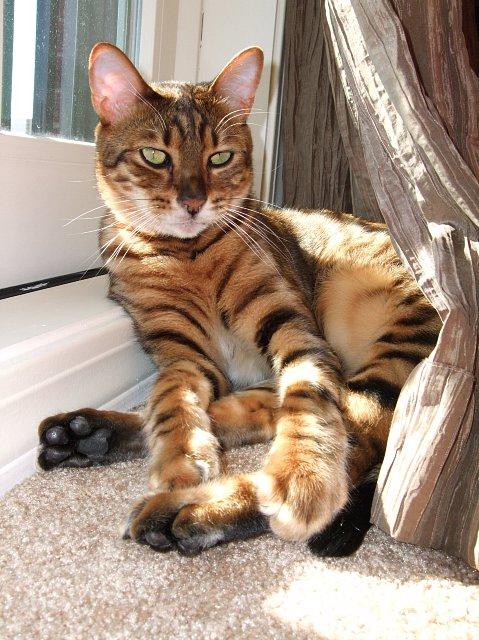 Ekstremalne Kot Tygrysi Cena Byw34 Usafrica