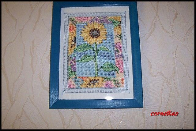 sunflowersierpien2015c