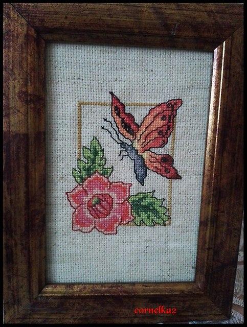 motylzkwiatemstyczen2019a