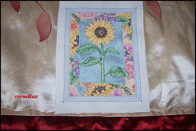 sunflowersierpien2015