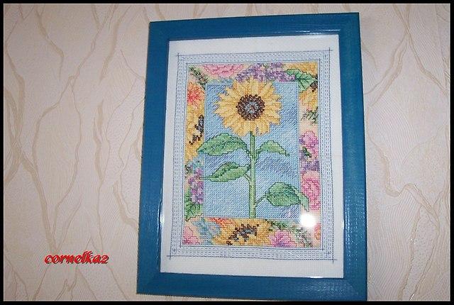 sunflowersierpien2015b