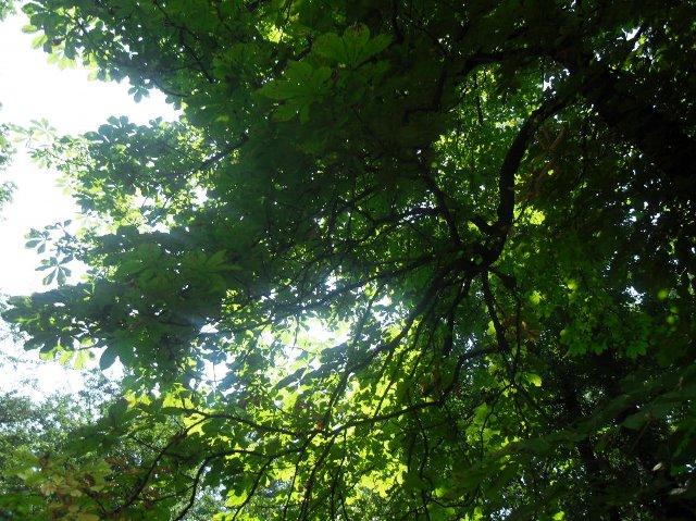 http://fotoforum.gazeta.pl/photo/6/pe/gc/rxw2/znZazgGKfKzC2H8SqB.jpg