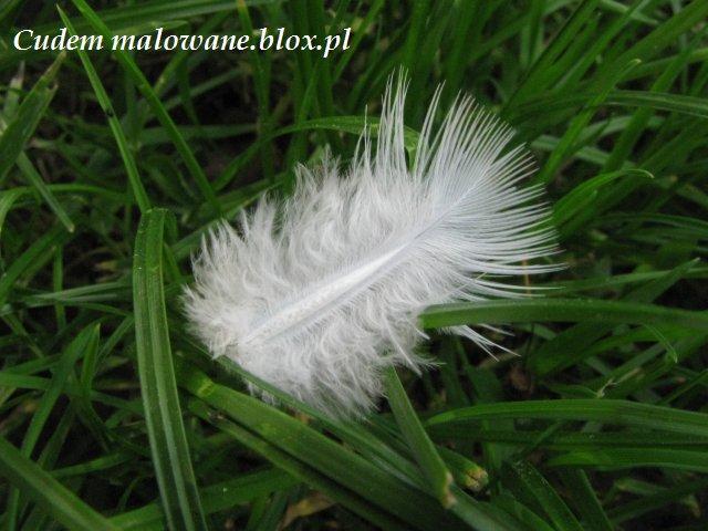 piórko w trawie...