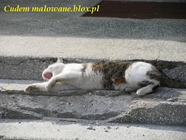 Rozwaląjce się schody i rozwalony kot