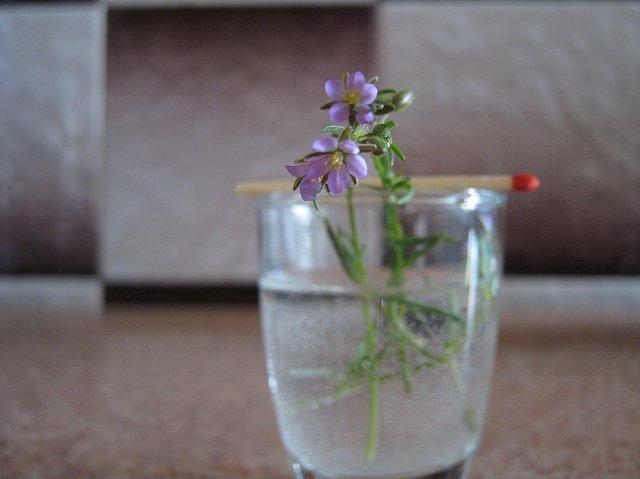 http://fotoforum.gazeta.pl/photo/7/df/ec/asjm/jeMboTOwTN1T9fwNOB.jpg