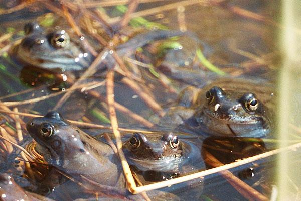 żaby 6