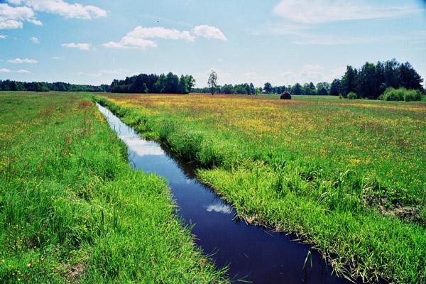 łąka w Fideście